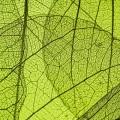 """Виниловый фотофон """"зеленый лист"""" под заказ"""